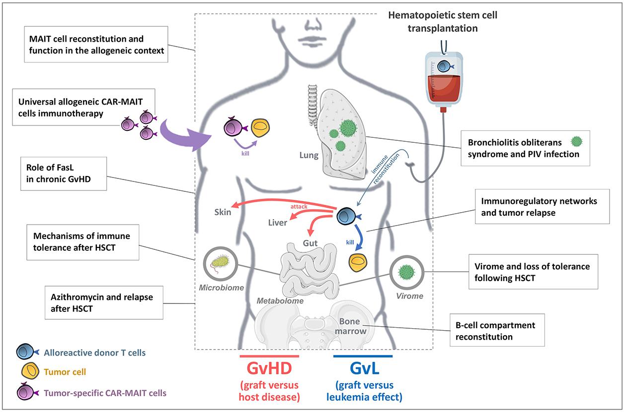 4 : Immune responses in the immunocompromised host: Tolerance versus GVHD