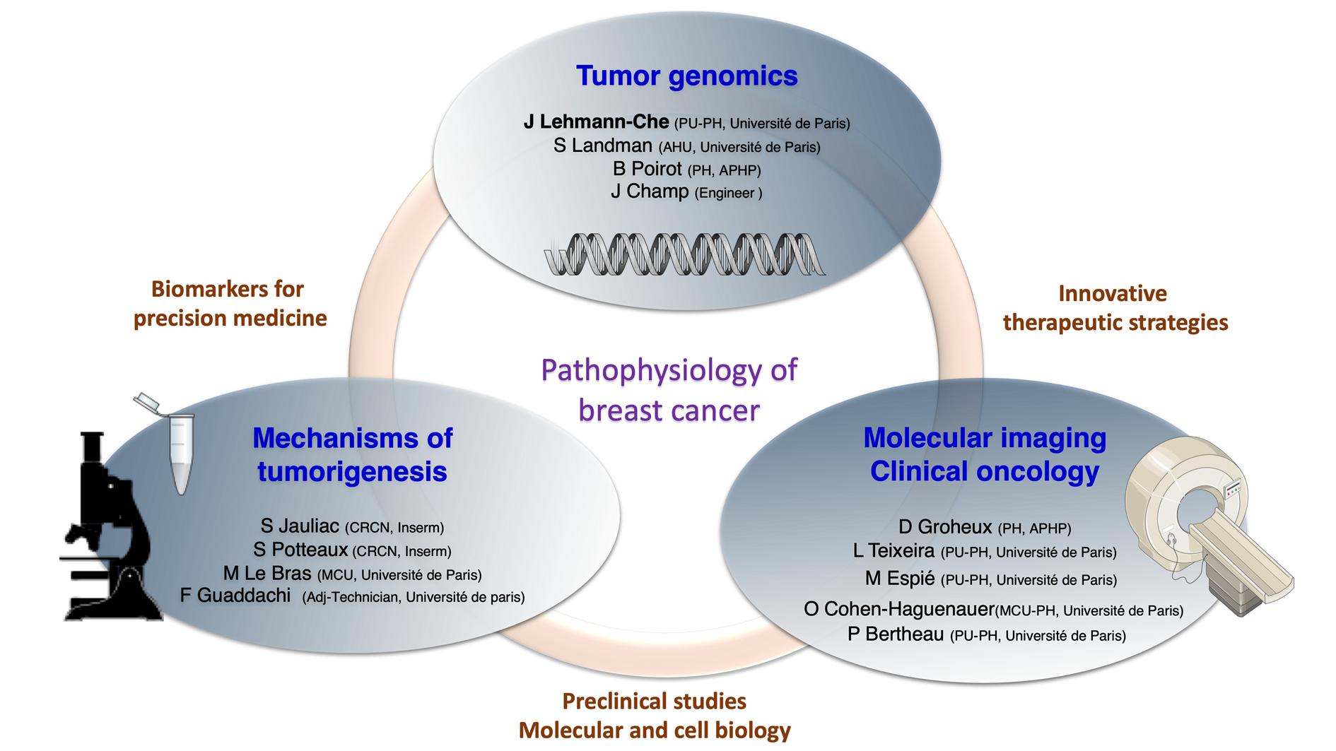 6 : Pathophysiology of breast cancer